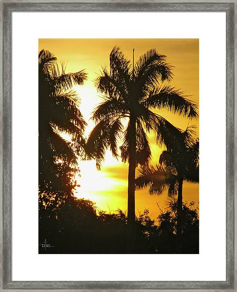 Tropical Sunset Palm Framed Print