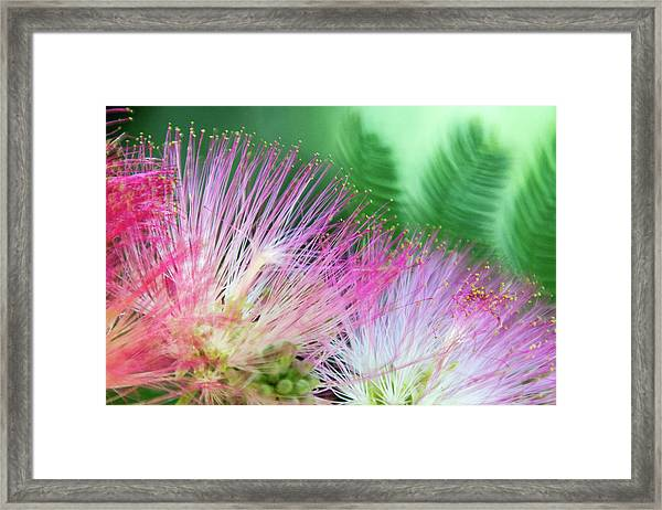 Tropical Twosome Framed Print