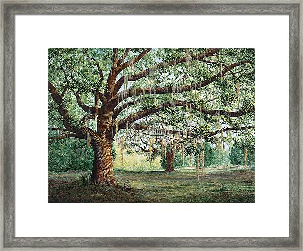 Tropical Trail Trio Framed Print