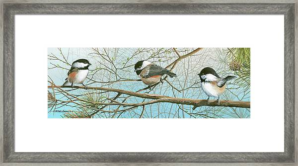 Troublesome Trio Framed Print