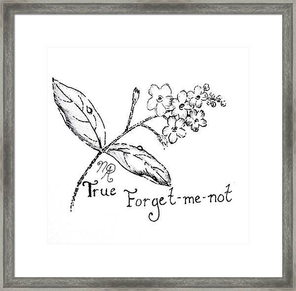 True Forget-me-not Framed Print