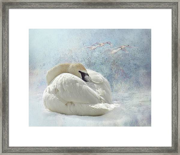 Framed Print featuring the photograph Trumpeter Textures #1 - Swan Feather by Patti Deters