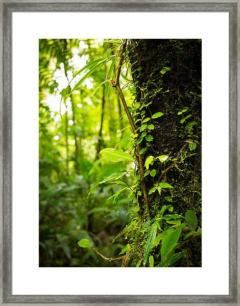 Trunk Of The Jungle Framed Print