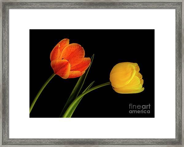 Tulip Pair Framed Print