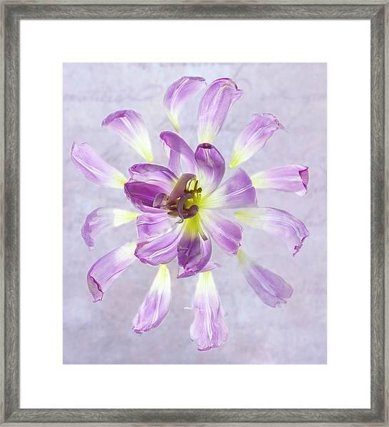 Tulip Patterns  Framed Print