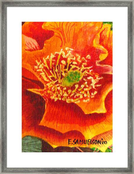 Tulip Prickly Pear Framed Print
