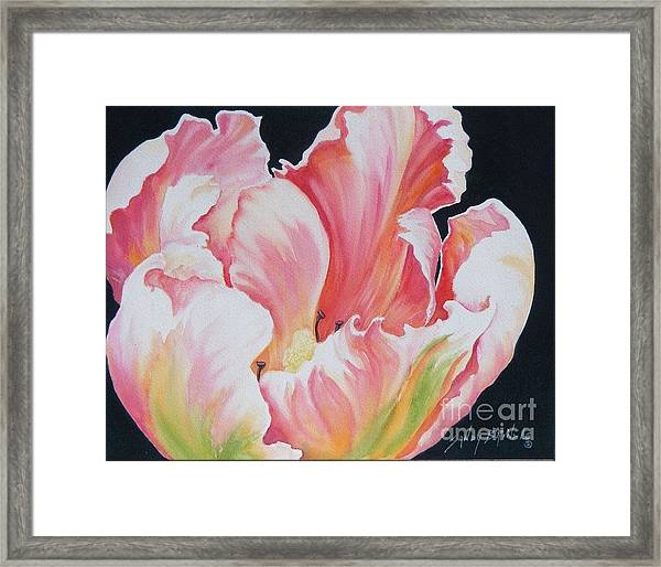 Tulip Sold Framed Print