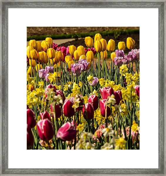 Tulip Spring Framed Print