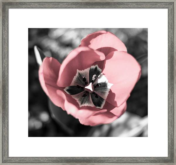 Tulip Up Close Framed Print