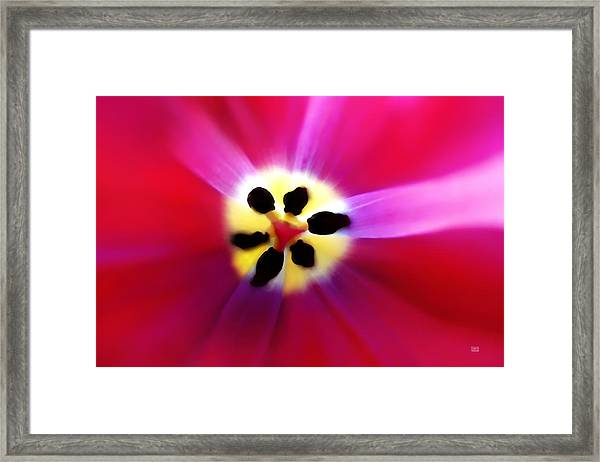 Tulip Vivid Floral Abstract Framed Print