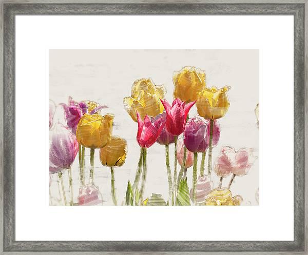 Tulipe Framed Print