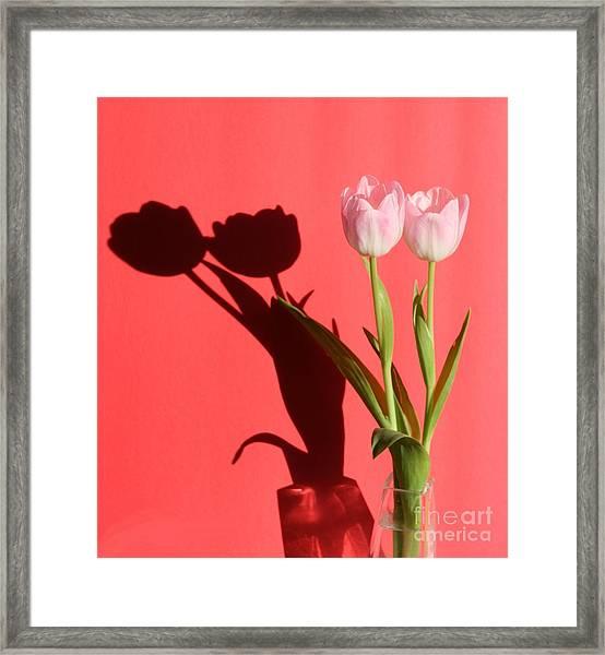 Tulips Casting Shadows Framed Print