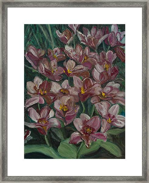 Tulips From Holland Framed Print