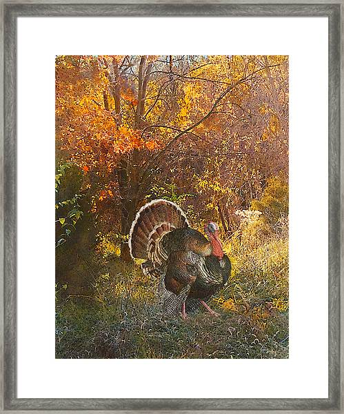 Turkey In The Woods Framed Print