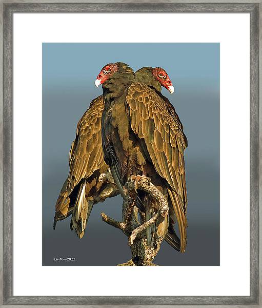 Turkey Vultures 2 Framed Print