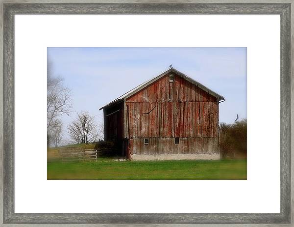 Turkey Vultures Hovering Around The Barn Framed Print