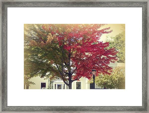 Turning A New Leaf Framed Print
