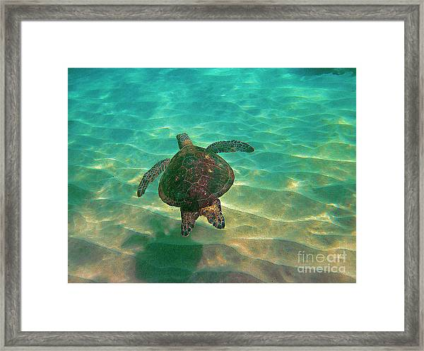 Turtle Sailing Over Sand Framed Print