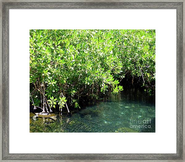 Turtle Swim Framed Print