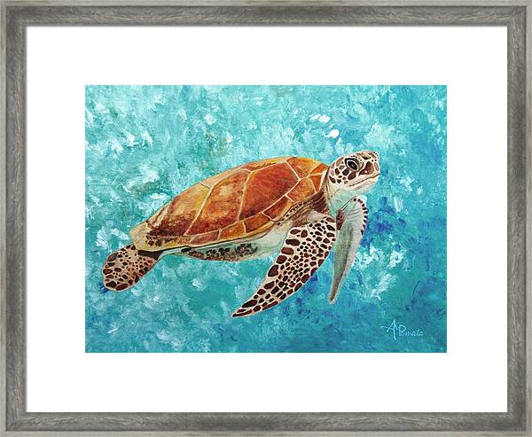 Turtle Swimming Framed Print