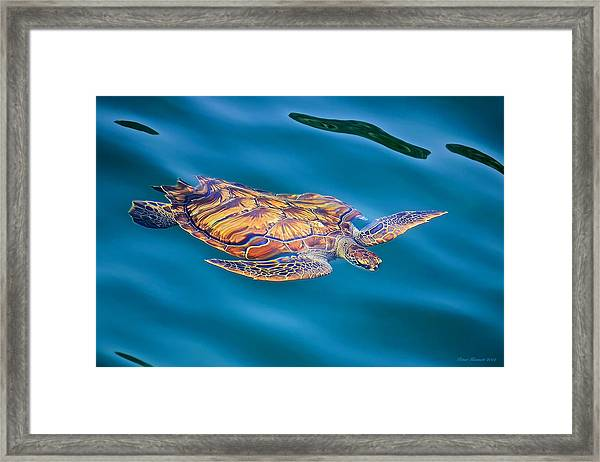 Turtle Up Framed Print
