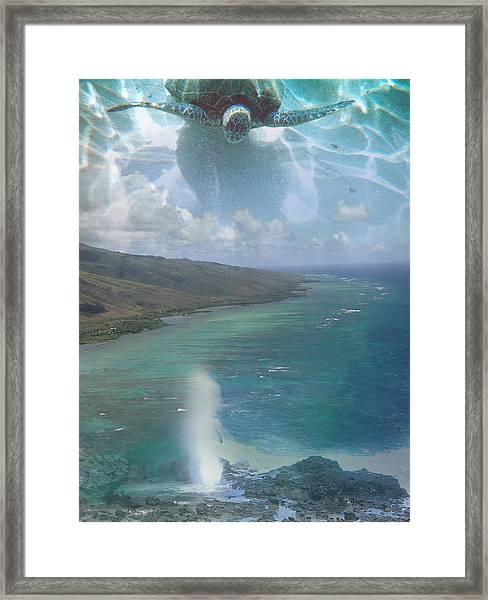 Turtle Vision Framed Print