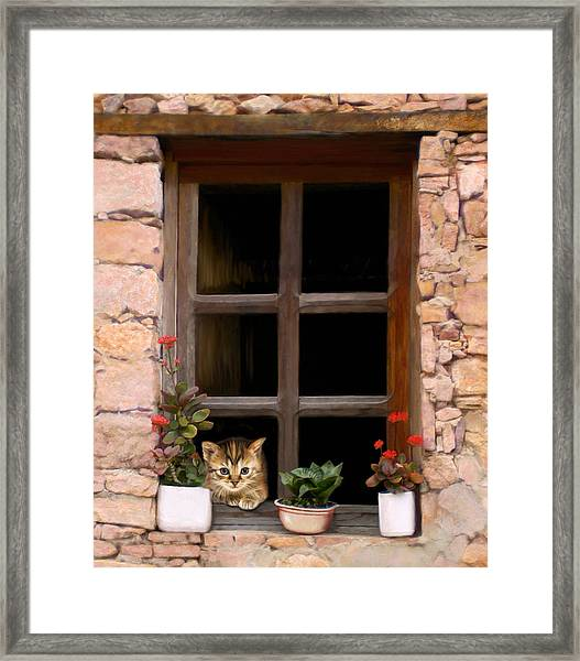 Tuscan Kitten In The Window Framed Print by Bob Nolin