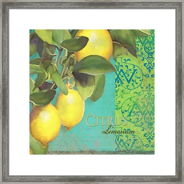 Tuscan Lemon Tree - Citrus Limonum Damask Framed Print