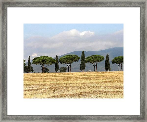 Tuscany Trees Framed Print