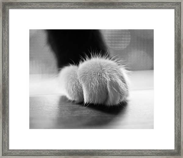 Tuxedo Cat Paw Black And White Framed Print