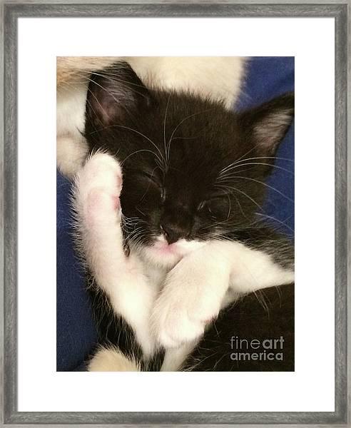Tuxedo Kitten Snoozing Framed Print