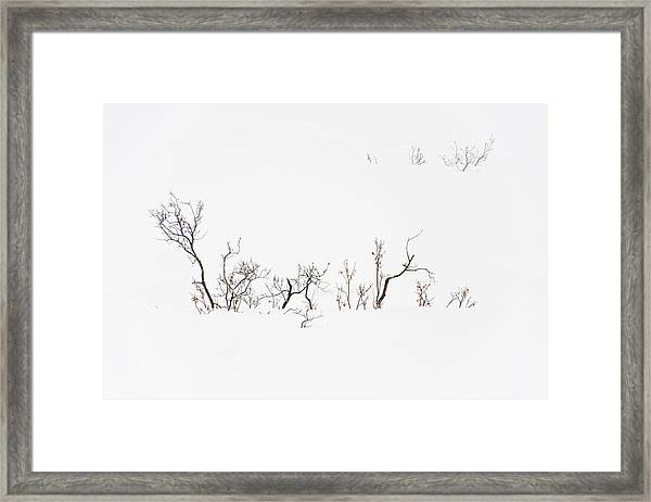 Twigs In Snow Framed Print