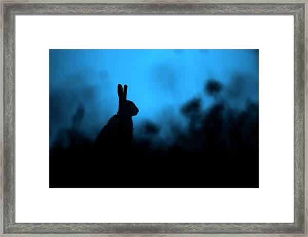 Twilight Hare Framed Print