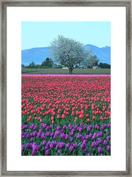 Twilight In Skagit Valley Framed Print