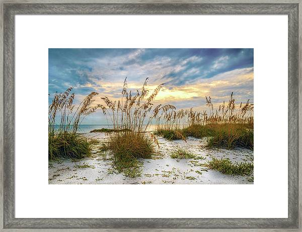 Twilight Sea Oats Framed Print