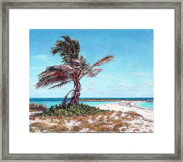 Twin Cove Palm Framed Print