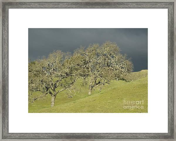 Twin Oaks Framed Print