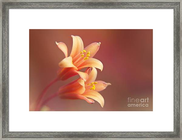 Twin Yucca Flowers Framed Print