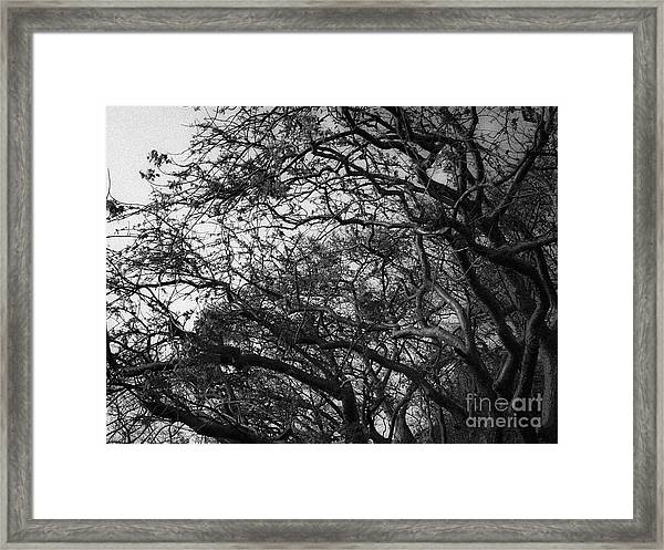 Twirling Branches Framed Print