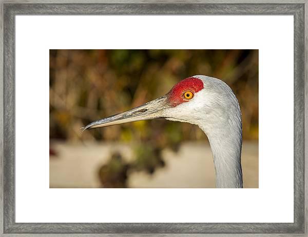 Twisted Beak Framed Print