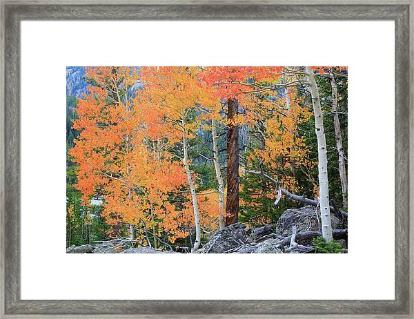 Twisted Pine Framed Print