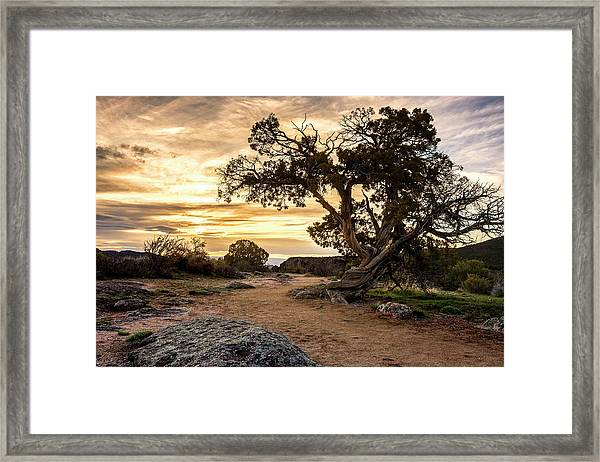 Twisted Sunset Framed Print