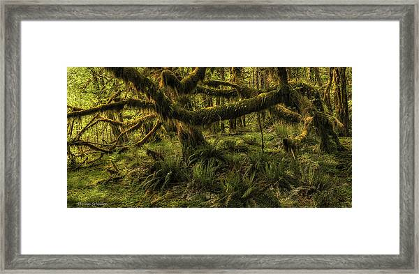 Twisted  Framed Print by T-S Fine Art Landscape Photography