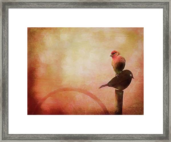 Two Birds In The Mist Framed Print