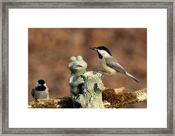 Two Black-capped Chickadees And Frog Framed Print