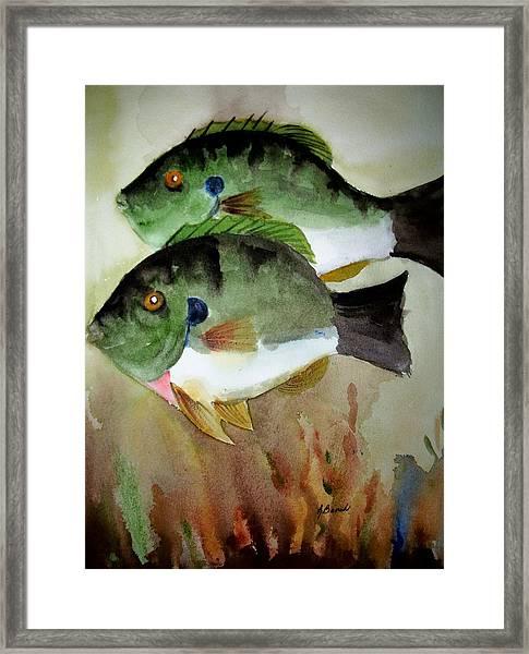 Two Bluegills Framed Print