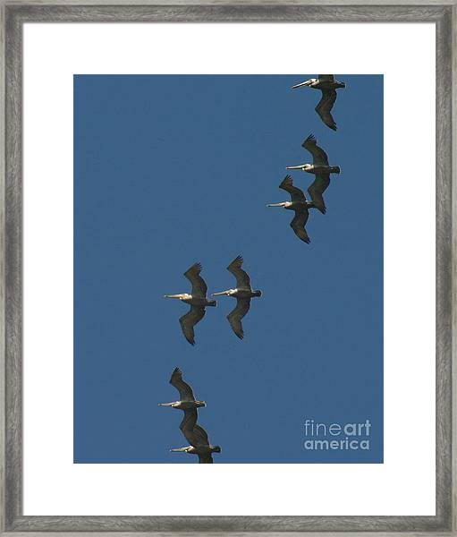 Two By Two Framed Print
