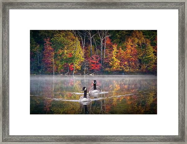 Two Canadian Geese Swimming In Autumn Framed Print