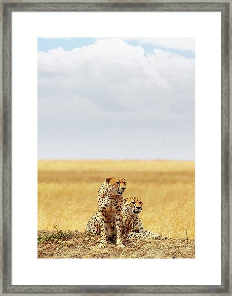 Two Cheetahs In Africa - Vertical With Copy Space Framed Print