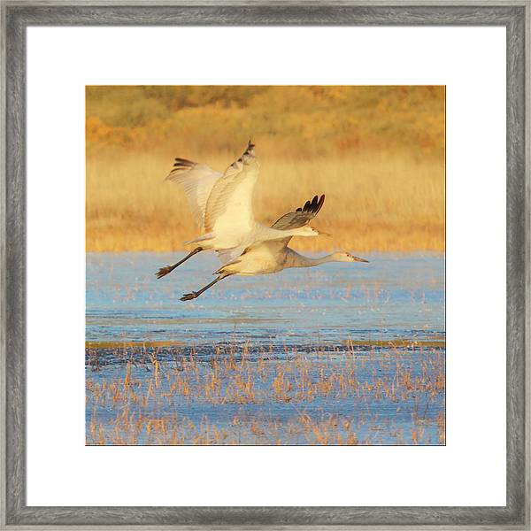 Two Cranes Cruising Framed Print
